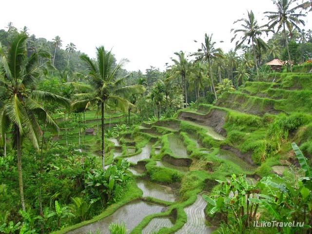 Рисовые террасы, Бали, Индонезия